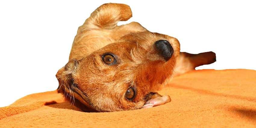 Online Hundeschule - Direkt mit Hundeerziehung starten