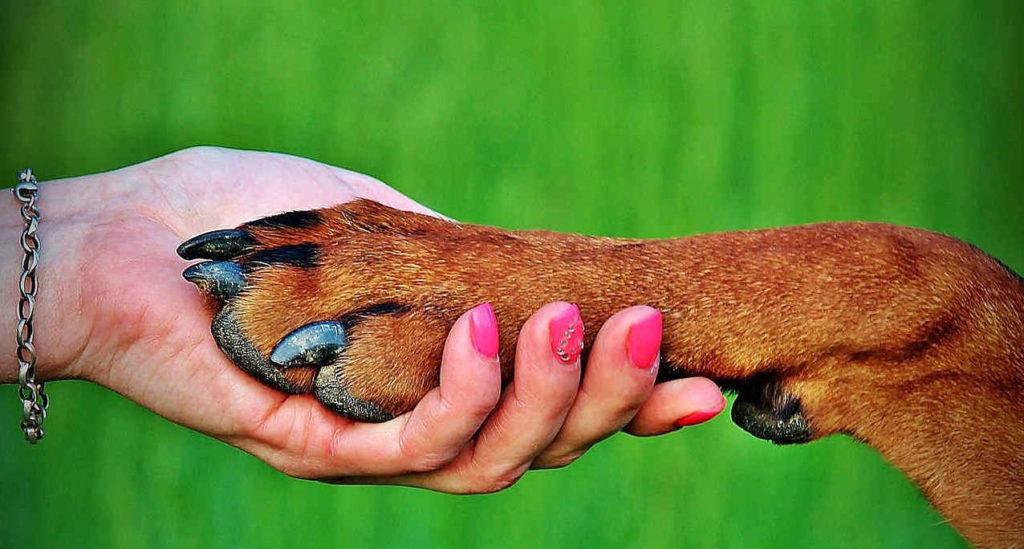 Hundetraining Tipps Frau mit Hund Pfote auf Hand