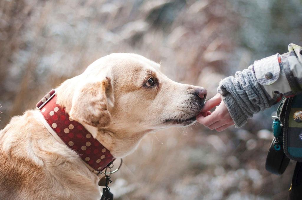 Online Hundeschule Vergleich