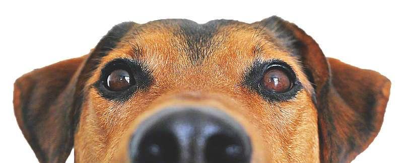 Hundeerziehung - Die Online Hundeschule
