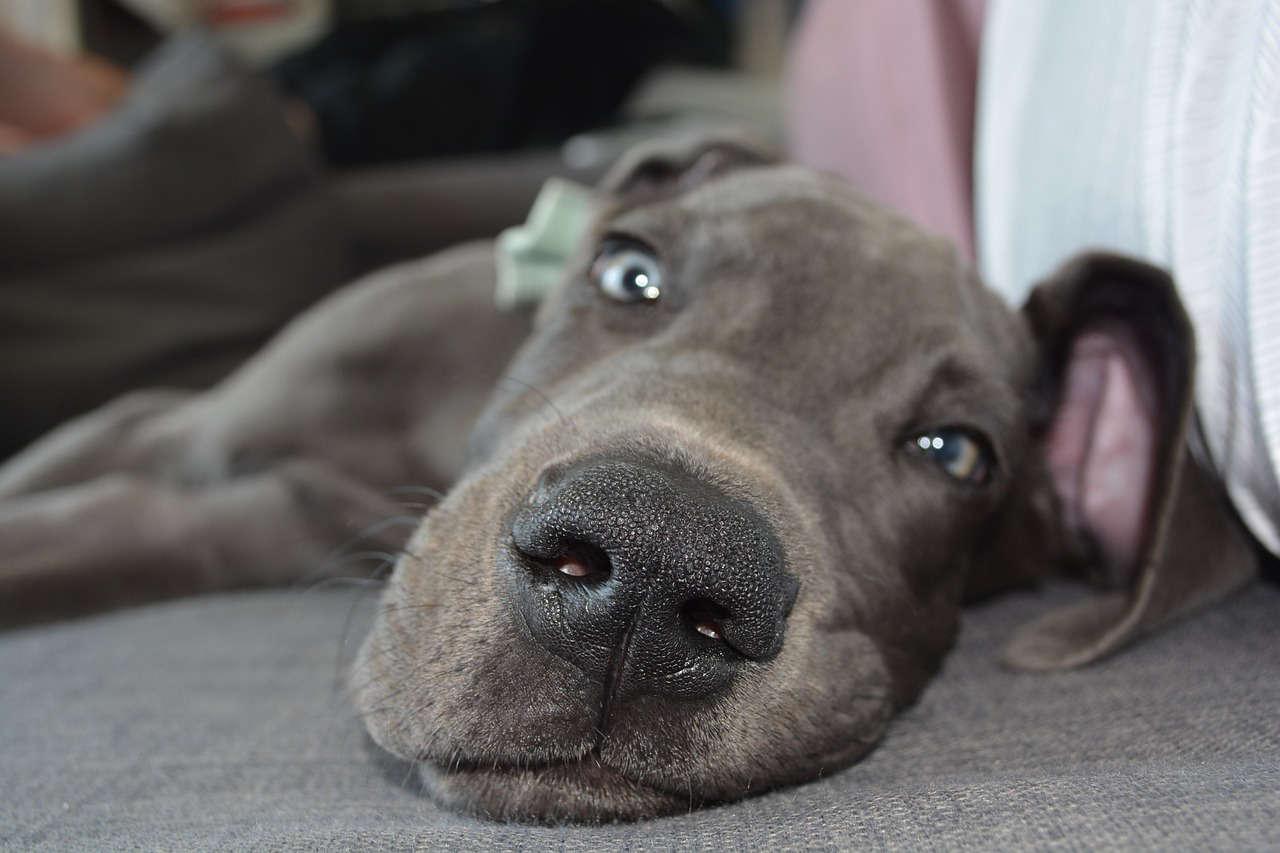 7 Fehler bei der Hundeerziehung