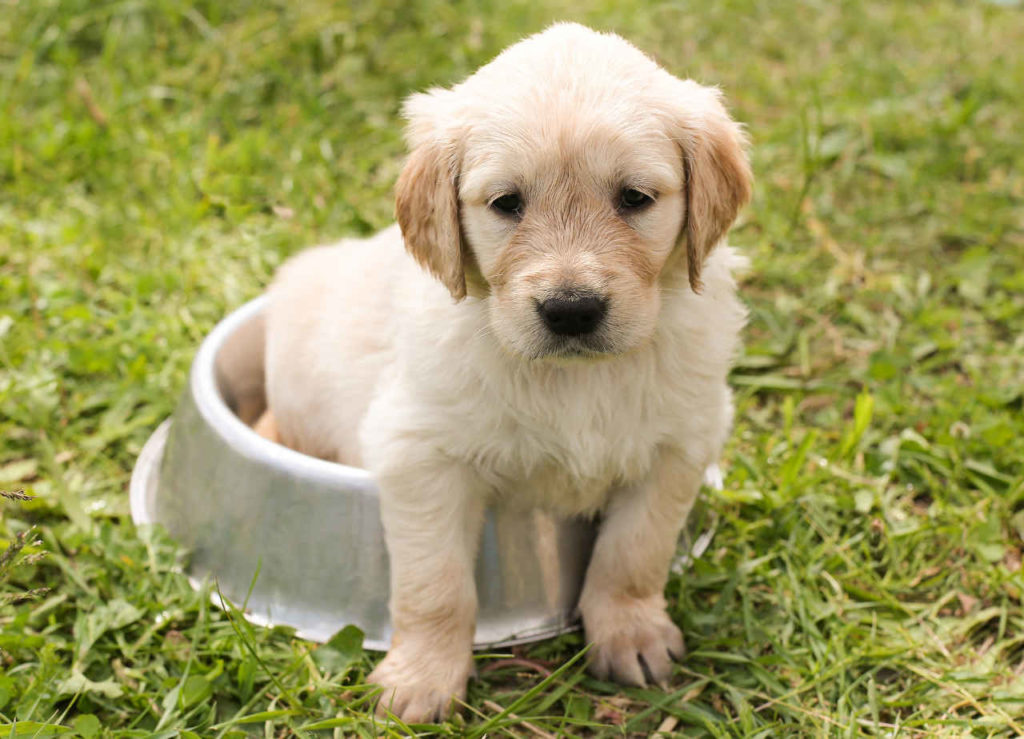 Hundetraining Tipps Welpentraining