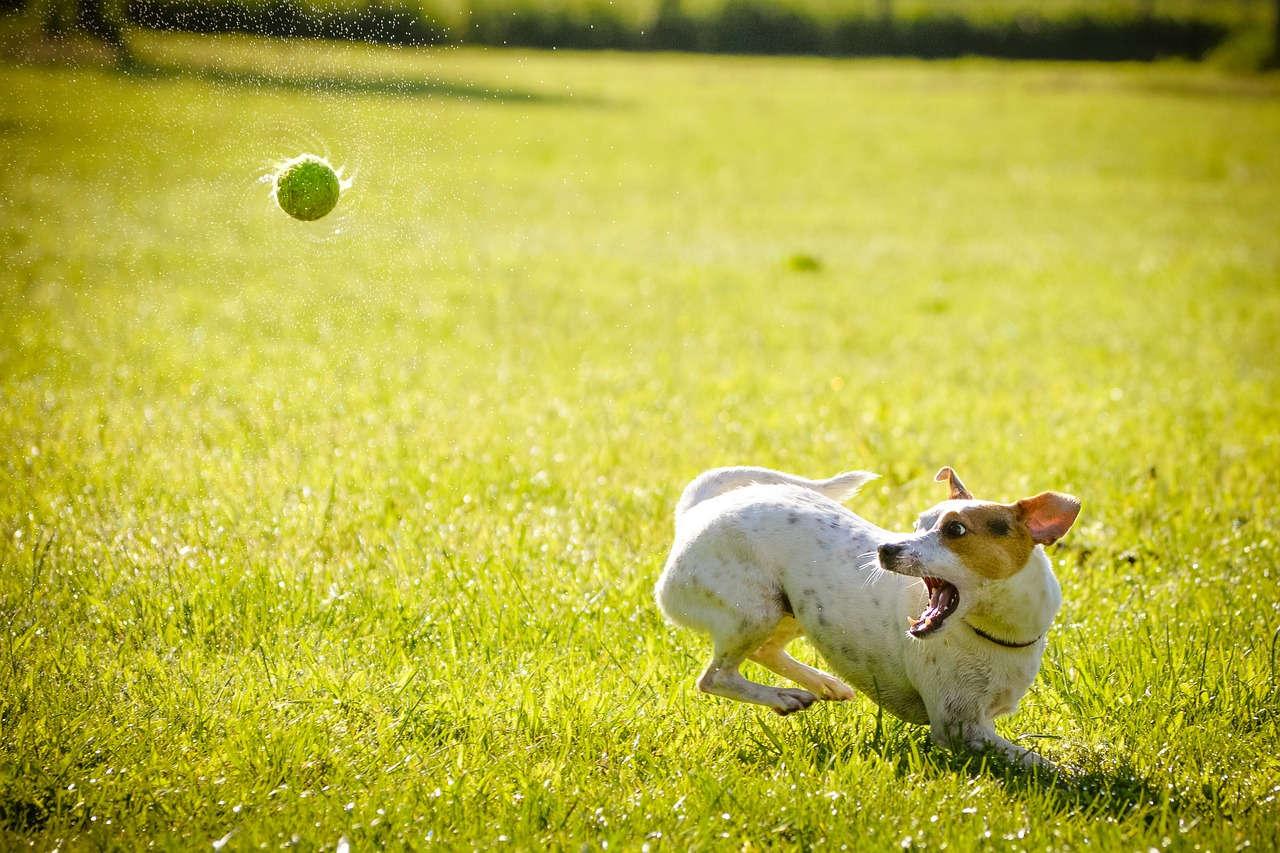 7 Tipps für eine erfolgreiche Hundeerziehung
