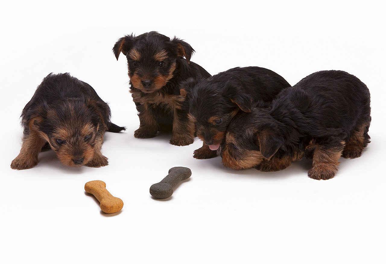 Gesundes Hundefutter Hundenahrung Barf Nassfutter Trockenfutter die-onlinehundeschule.de