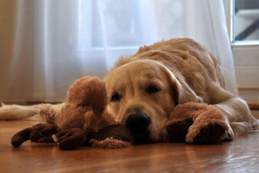 Hundetraining Spielzeug apportieren drinnen die-onlinehundeschule.de