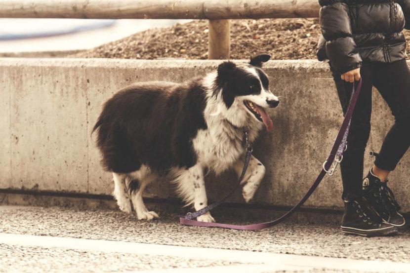 Leinenführigkeit Hundetraining