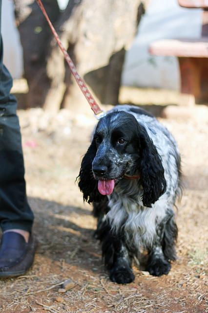 Leinenführigkeit Hundetraining Belohnung
