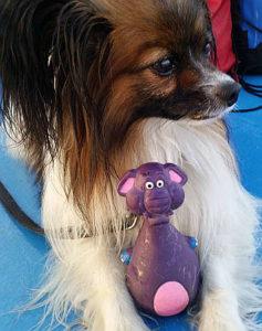 Hundespielzeug lila Elefant und Papillon Pauli