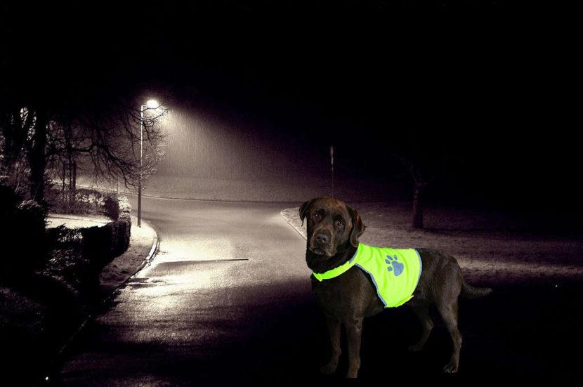 Gassi gehen im Dunkeln . Sicherheit für deinen Hund
