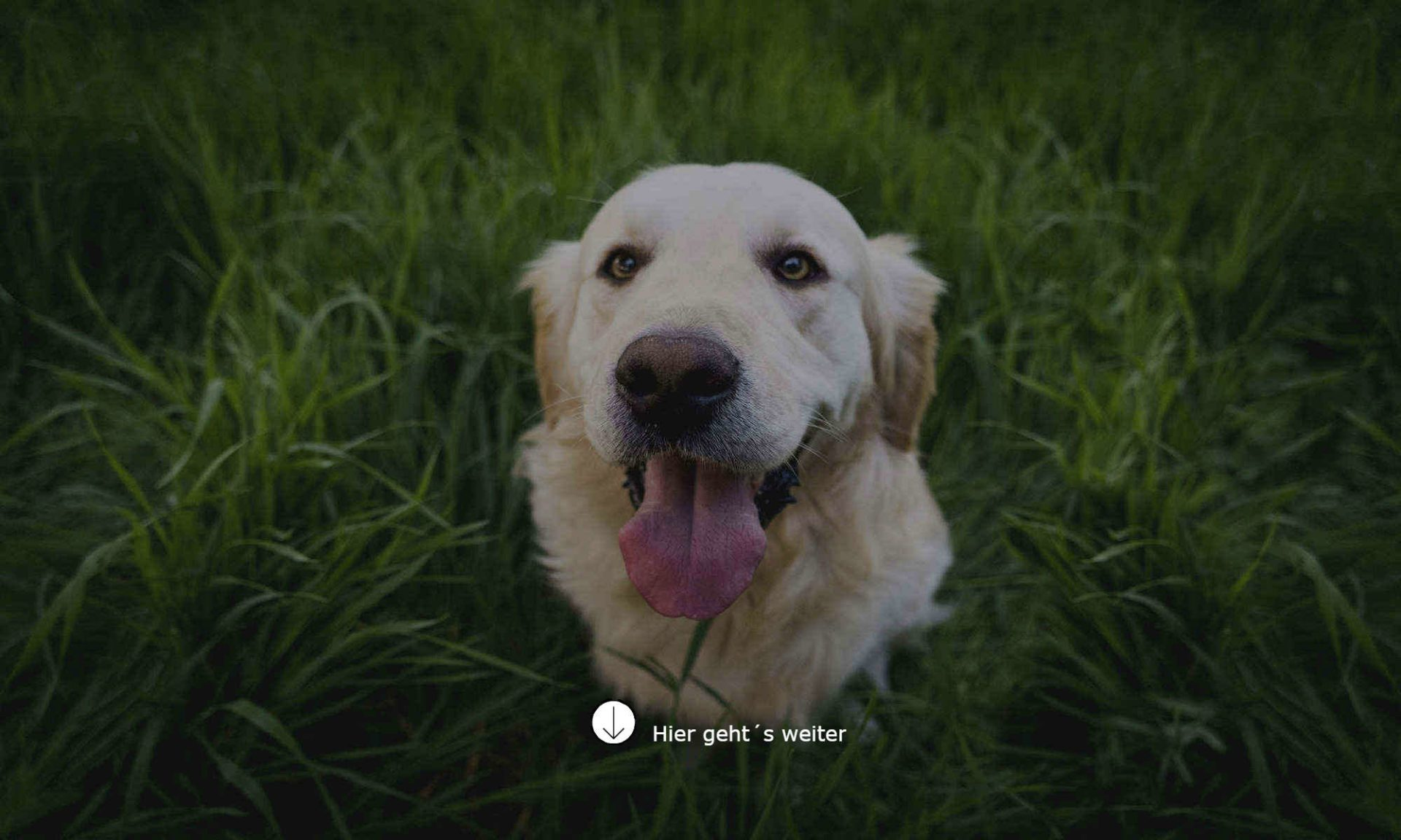 Die Online Hundeschule