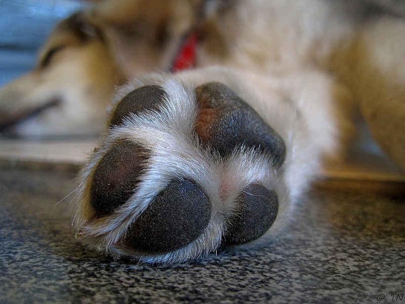Hunde träumen