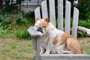 Hunde Schlafplatz