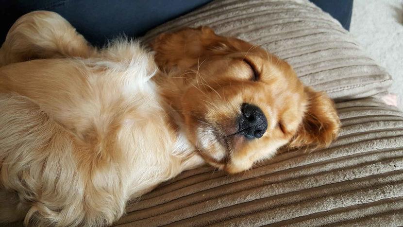 Hunde schlafen - Schlafverhalten Hund