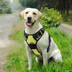 Hundegeschirr für mittelgroße Hunde
