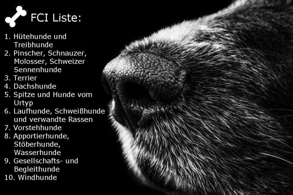 Hunderassen FCI Einteilung Hunde A-Z