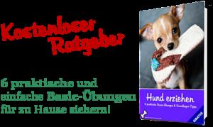 E-Book Ratgeber Hund erziehen Basic-Übungen Tipps Gratis Download