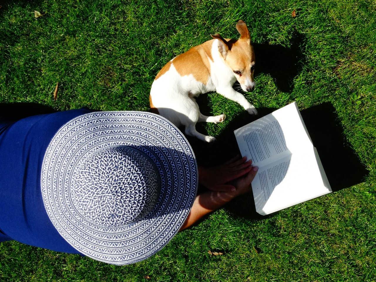 Hundebücher - Hundeerziehungs Bücher