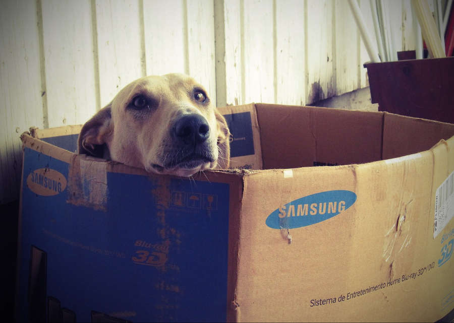 Hundehütte selber bauen oder kaufen