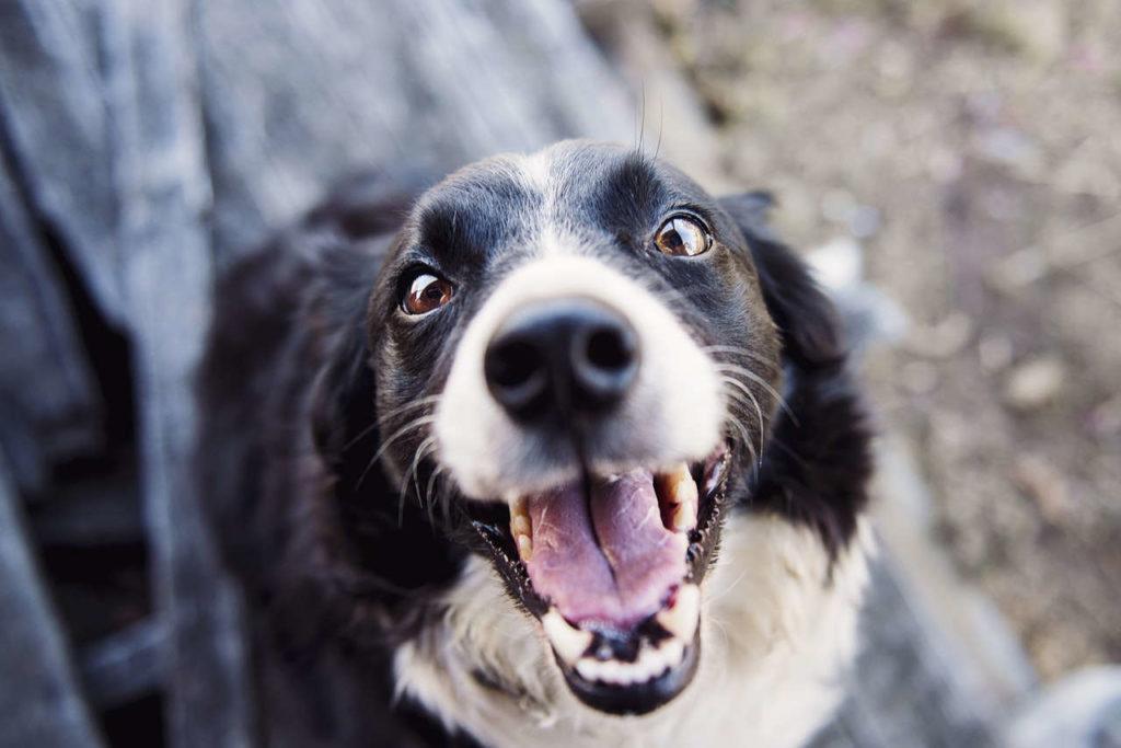 Körpersprache Hund Aufforderung