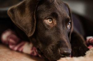 Körpersprache Hund verstehen