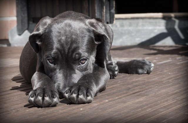 Körpersprache Hund Entspannung
