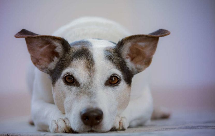 Hund Platz beibringen