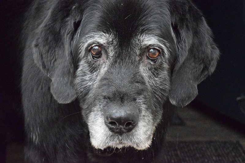 Alter Hund Sitz beibringen
