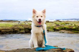 Hund Sitz beibringen - Draußen