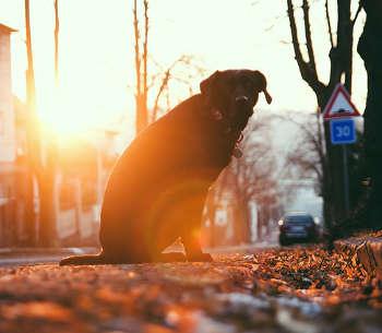 Hund Sitz beibringen Straßenverkehr Straße Ampel