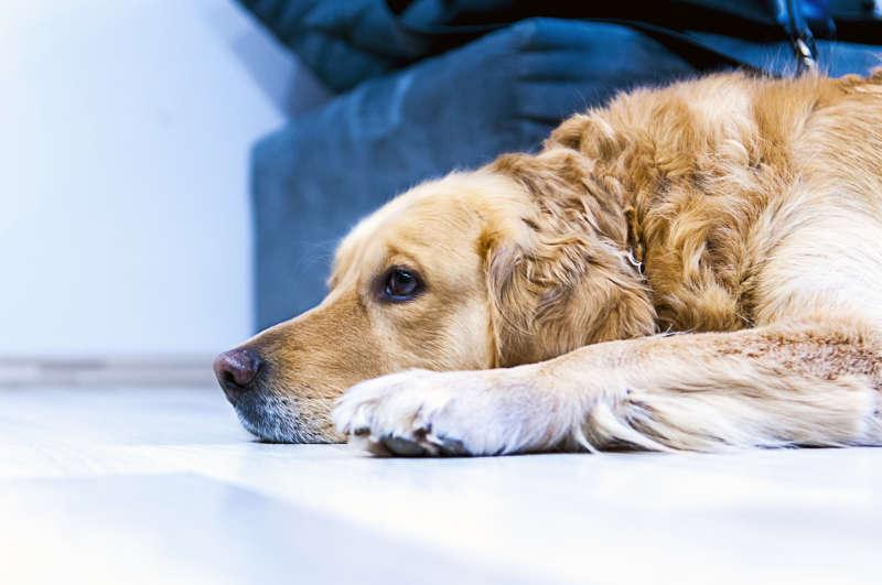 Wartezeit Hunde OP Versicherung