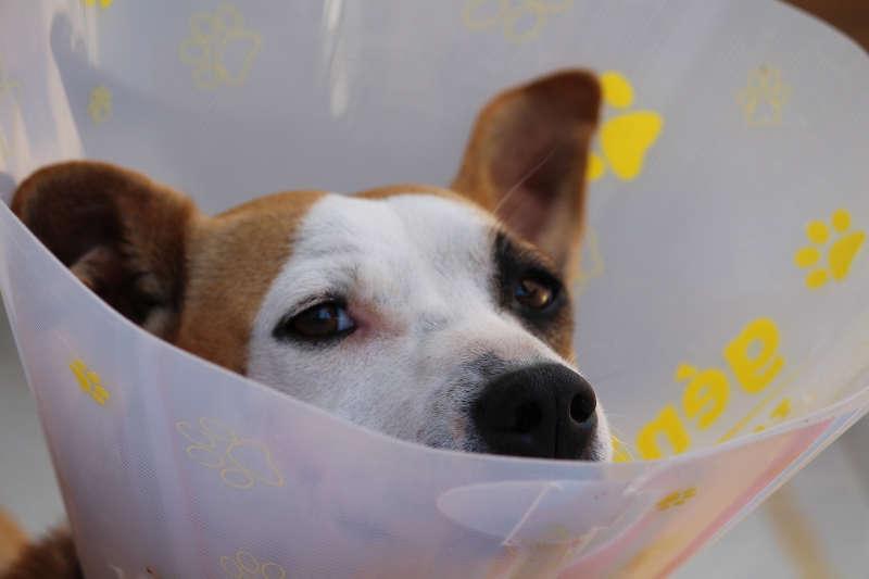 OP Versicherung für Hunde Halskrause Nachbehandlung