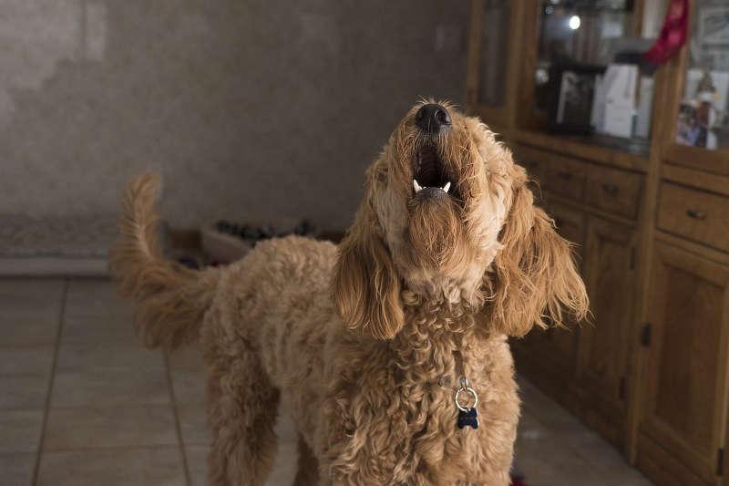 Hund das Bellen abgewöhnen