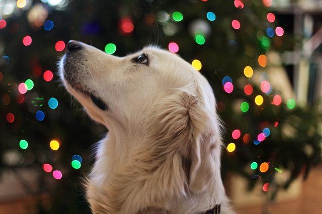 Hund Silvester Tipps ablenken