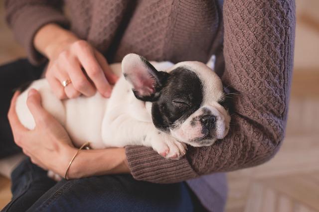 Hund an Silvester - Tipps für Silvesternacht
