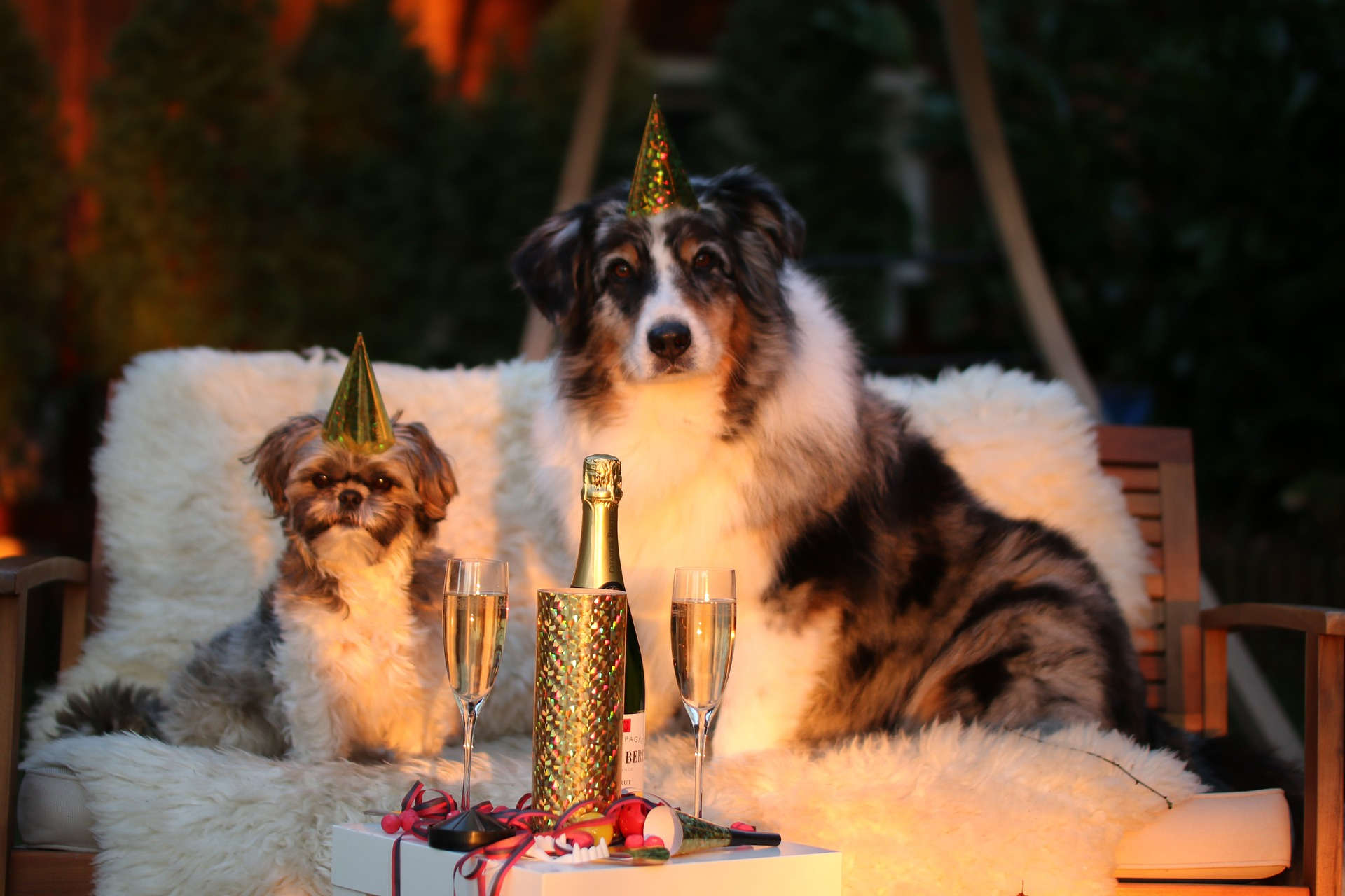 Hund Silvester Angst nehmen Tipps für Angsthunde