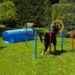 Hundeagility Agility kaufen test