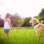Hundeleine kaufen test