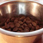 Trockenfutter kaufen test