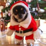 Saisonales Hundezubehör kaufen test