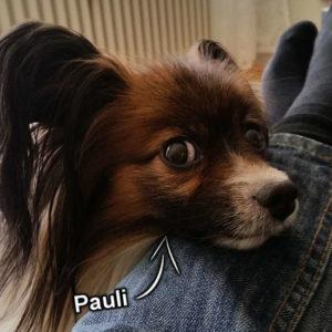 Über uns - Papillon Pauli