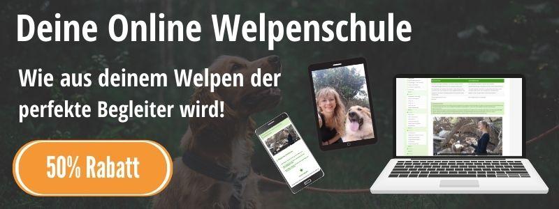 Welpenschule Online Sarah Löwenstein